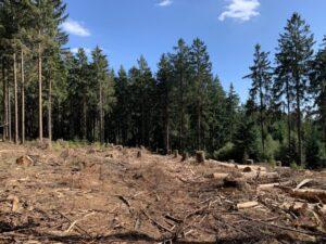 Aufforstung Waldsterben Taunus Wiesbaden klima geschaedigte Bäume im Stadtwald