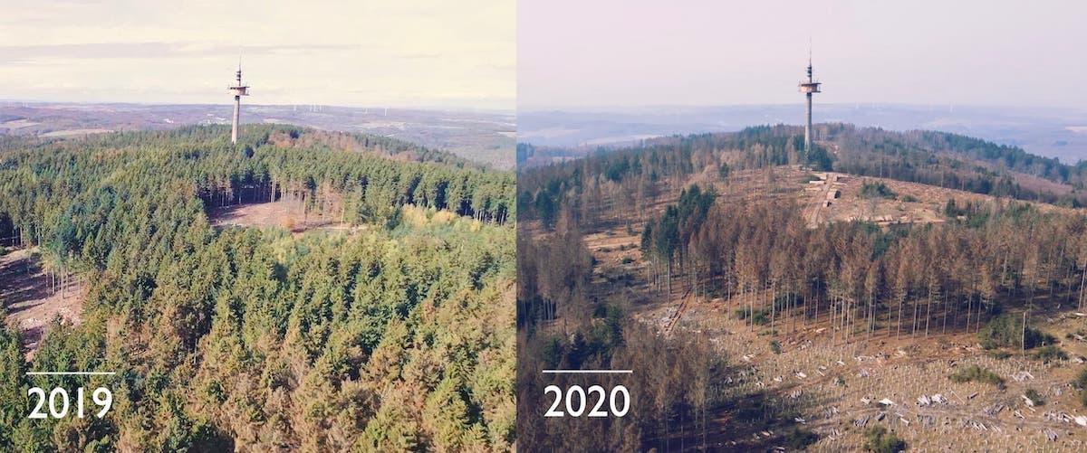 Hessenforst Waldprojekt Fink Fuchs Luftaufnahmen 2019 2020 Vergleich Waldverlust